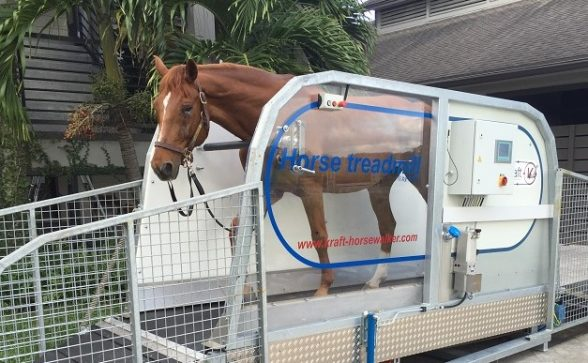 Horse Treadmill by Kraft